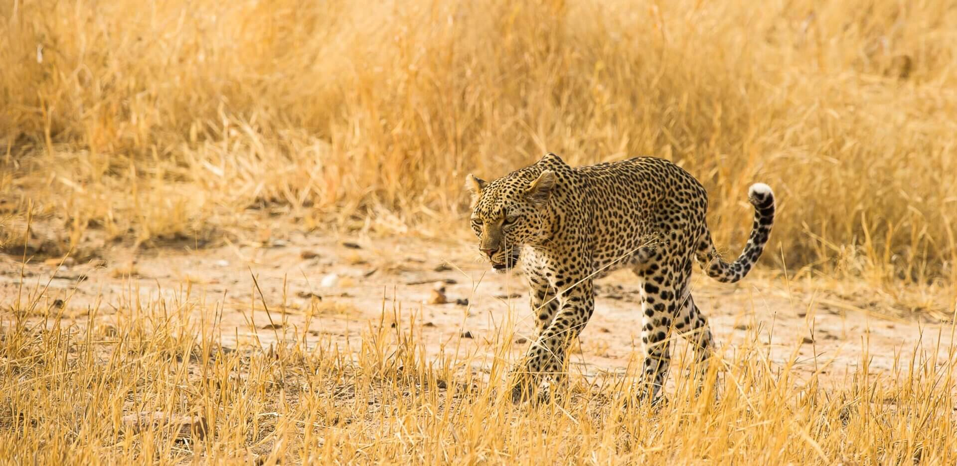 ruaha-national-park3