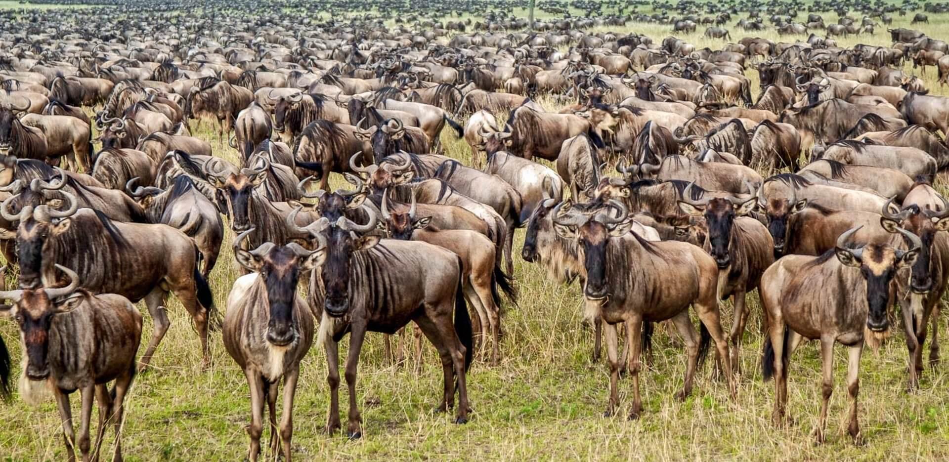 wildlife-migrations